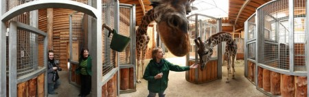 Meeting Giraffes at the Riga Zoo